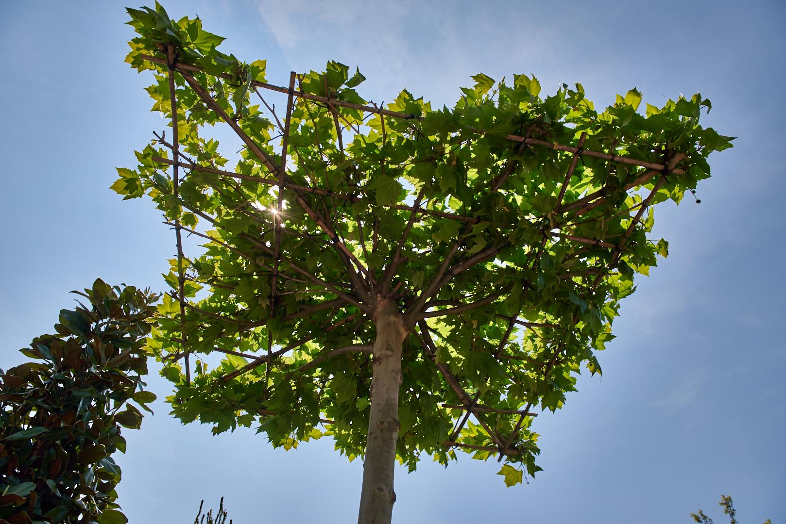 Növénykölcsönzés - Budai Kertcentrum